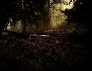 Fairytale Forest by Yesterdawn