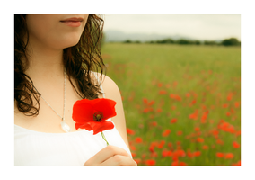Poppies fields 04 by Selfassault
