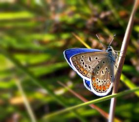 the nature side of the blue by lisans