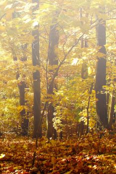 Gilded Leaves by Ken-Griffith