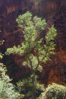 Trees in Zion by Coi-kins
