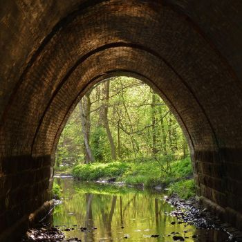 Forest underpass by Bozar88