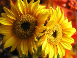 sunflower by kumArts