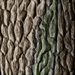 Tree bark study (Daily 23) by Aurora-Alley