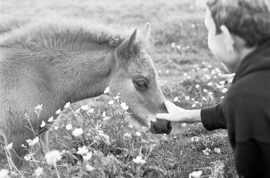 Equine contact by Karinta