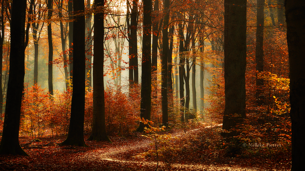 Autumnal Fairytale by Nelleke