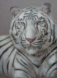 White Tiger by OneWindCatcher