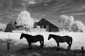 IR horses by GooFE