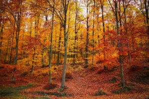 Autumn in the forest by valiunic
