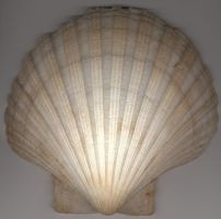 Shell by Arsenica-stock