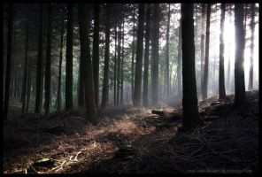 Woodland Light by sam-knight