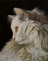 Cat by Camille-Marie