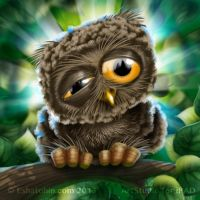Little Owl by shatos