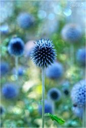 Blue by AStoKo