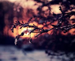 Snow and December Sun by Peterix