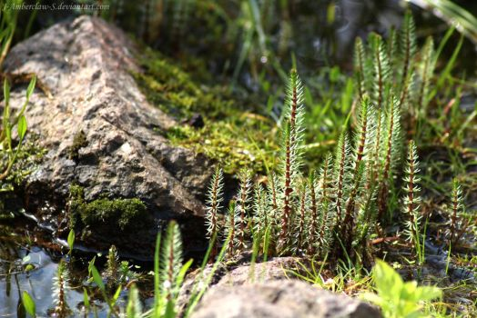 Micro forest by J-Amberclaw-S