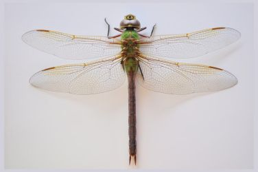 lb1-195 Dragonfly by bstocked