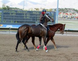 Racehorse Stock 51 by Rejects-Stock