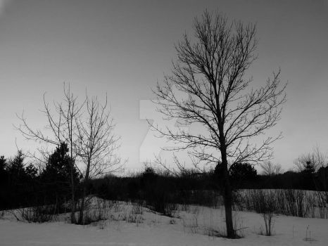 Dead Trees in The Winter by kandi