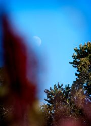 Moonlight in the Daytime by DARRYL-SMITH