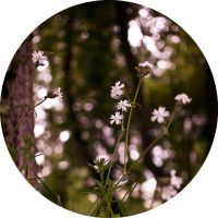 flower cercle IV by takingu