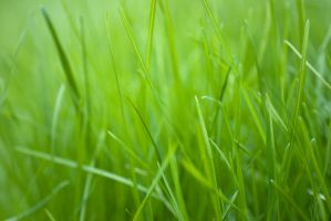 Green Grass by weirdfish2