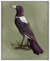 Life of the Sylvans: Violet Magpie by Sheather888