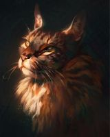 Maine Coon by Pixxus