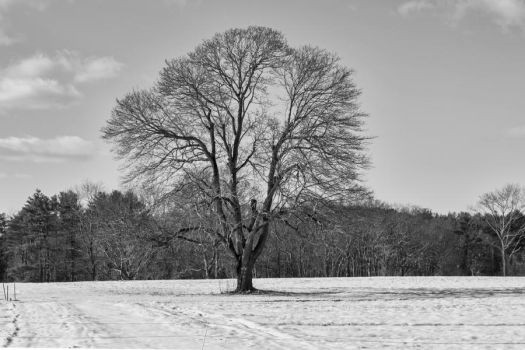 Snow Tree by jjcpix