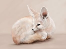 Fennec by the-frozen-bunny