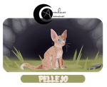 AYA | Pellejo | Aprendiz by 0-COCKER-0