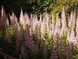 Flower Forest by tudybeck