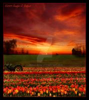 Tulip Farm Sunset by Jenna-Rose