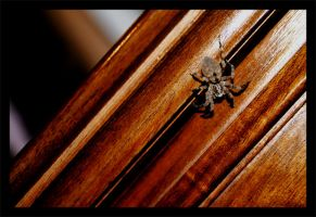 Spider 1 by buio
