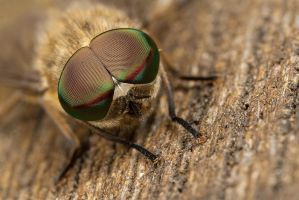 Horsefly eyes by Alliec