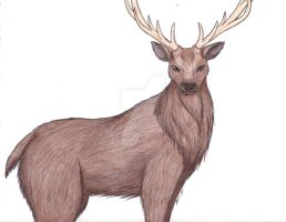 AT: Stag by ArtemisRune