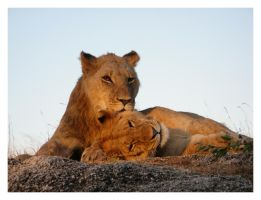 Walking with Lions by ArtlessHmmmm