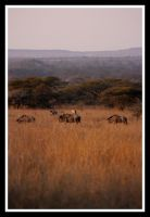 Perspective of Africa by Ubhejane