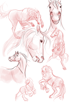 Horse sketches by Megnarr