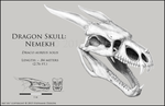 Dragon Skull - Nemekh by LeccathuFurvicael