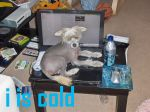 i is cold by Zanowin