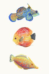 Water Colors by ZHField