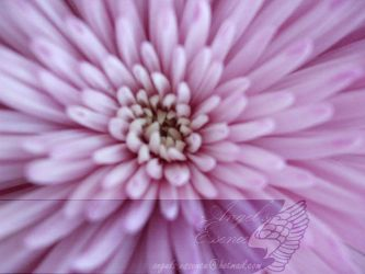 Inside a flower by AngelsEssence