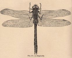 Vintage Dragonfly by HauntingVisionsStock