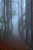 Misty forest, Sri Lanka by jaroslavnisler