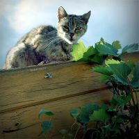 cat on the roof by brabikate