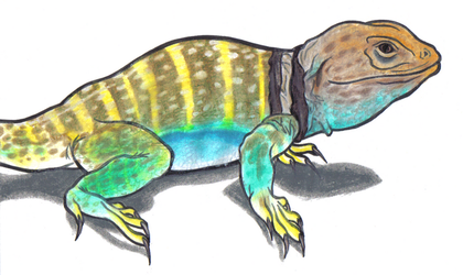 Collared Lizard for Coryv by That-One-Midget