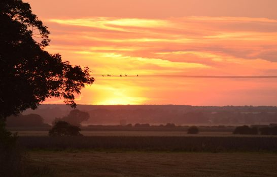 Birds on a wire by TomRolfe