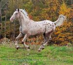 Cloudy Day Canter - Input Requested! by Crazy-Sparkles-Stock