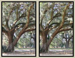 stereoscopic tree by pwg